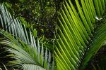 feuilles-de-palmiers-sous-lesl-tropiques-HD