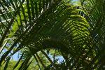 grands-palmiers-poussant-sous-les-tropiques