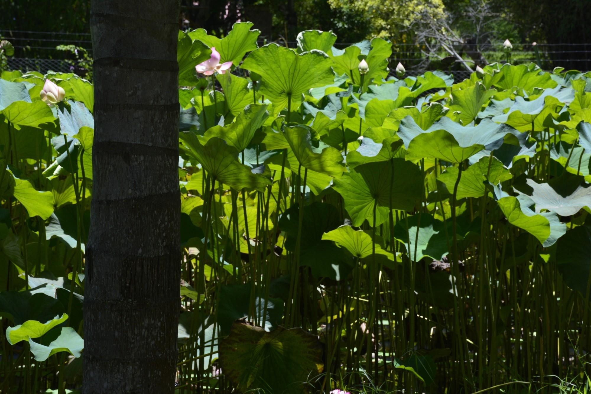 verdure-luxuriante-sous-lesl-tropiques-wallpaper