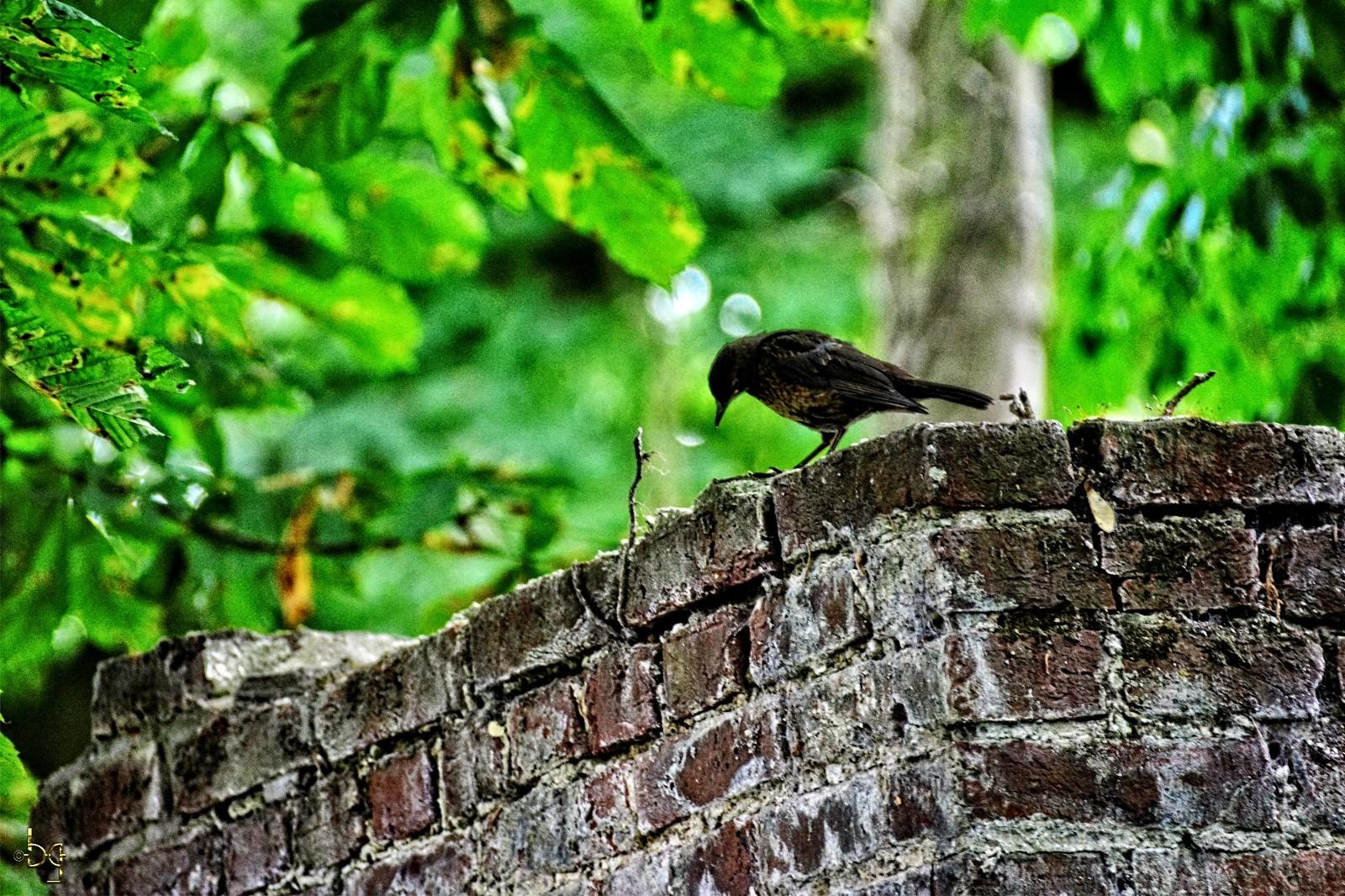 tirage-photo-DIY_oiseau_sur_le_mur