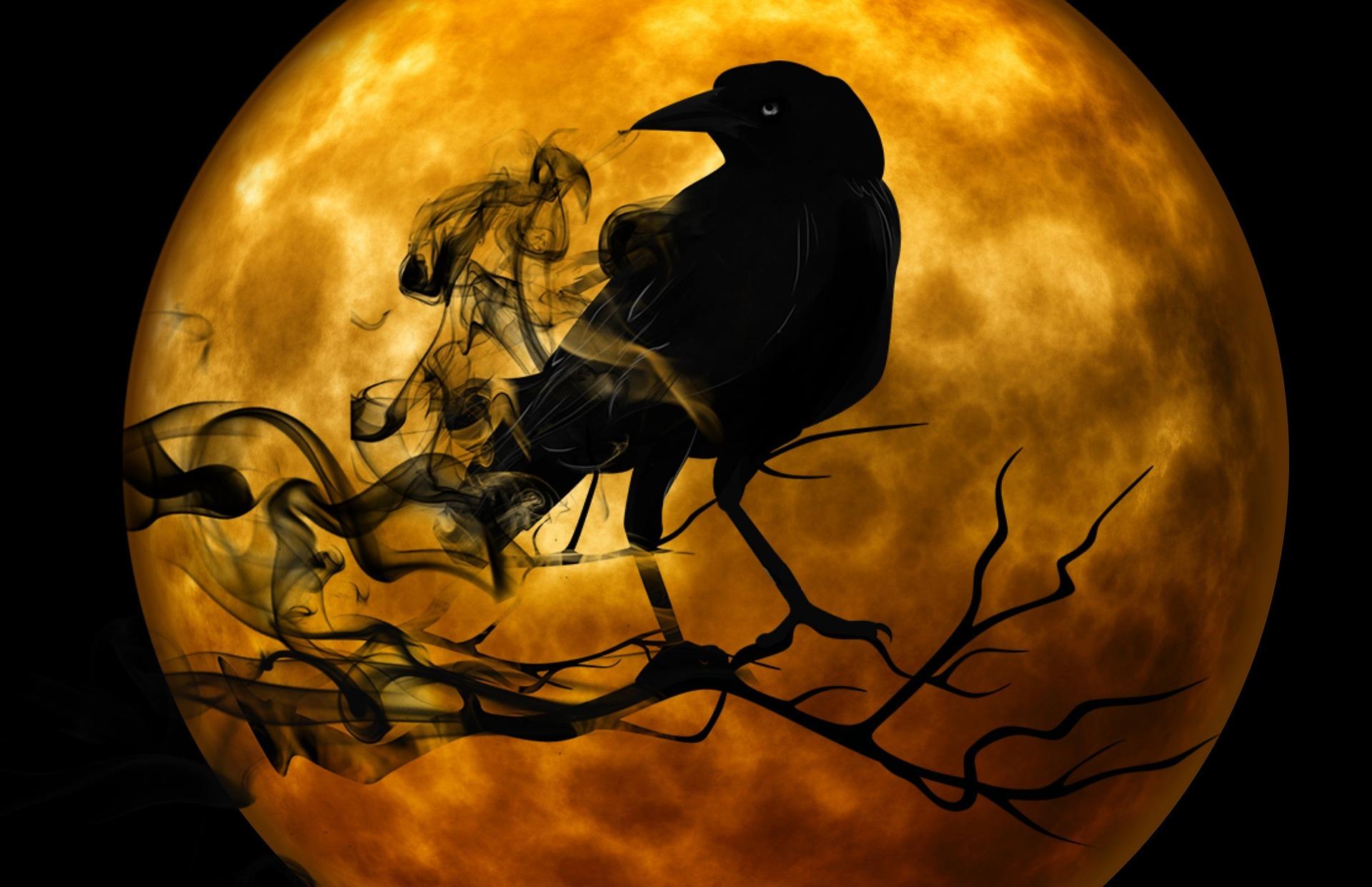 corbeau-noir