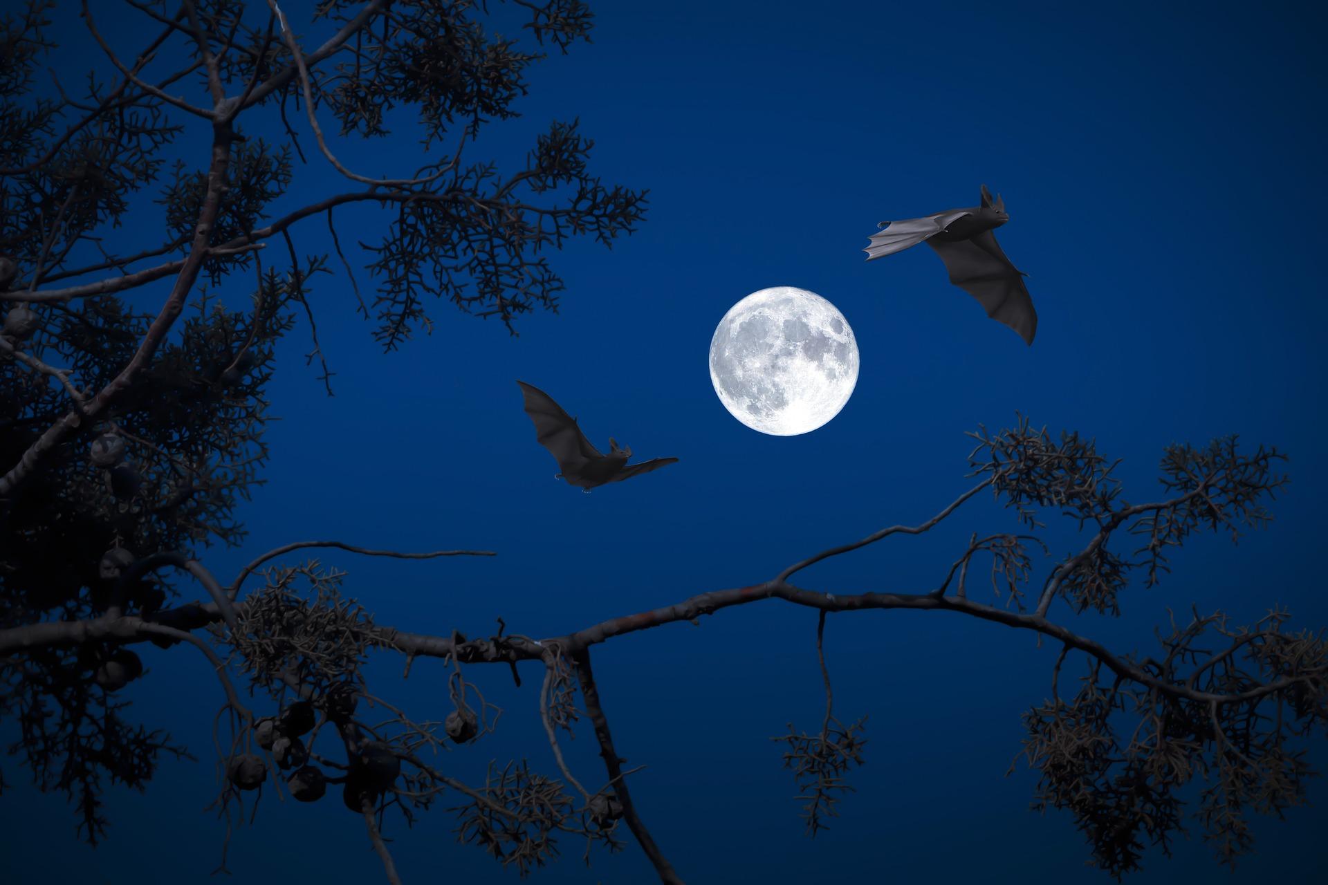 la-pleine-lune
