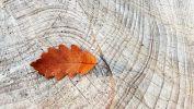 automne-graphisme