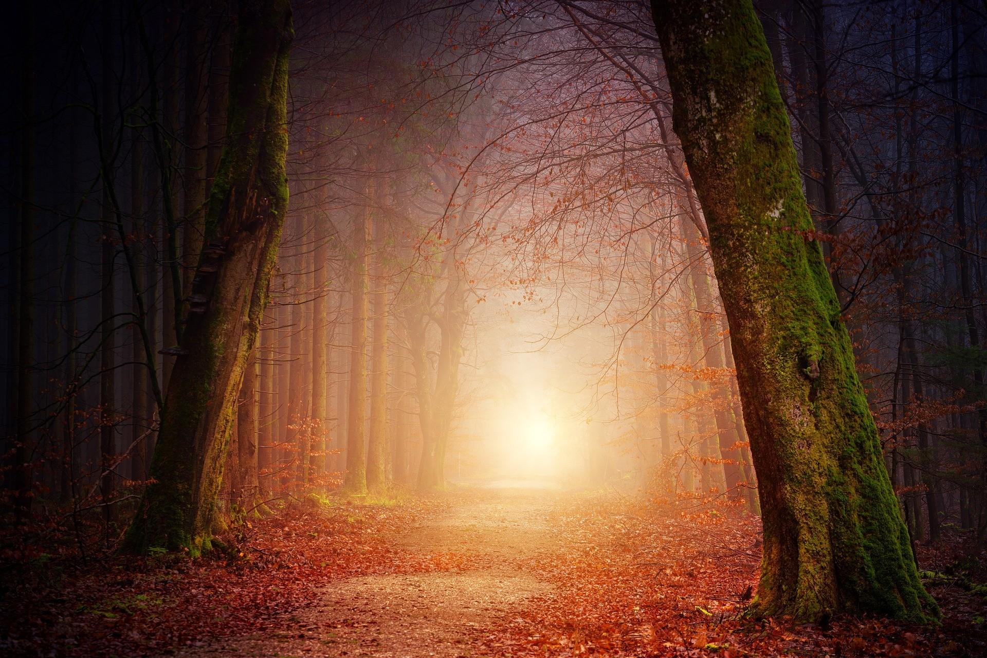 nature-et-soleil-automne