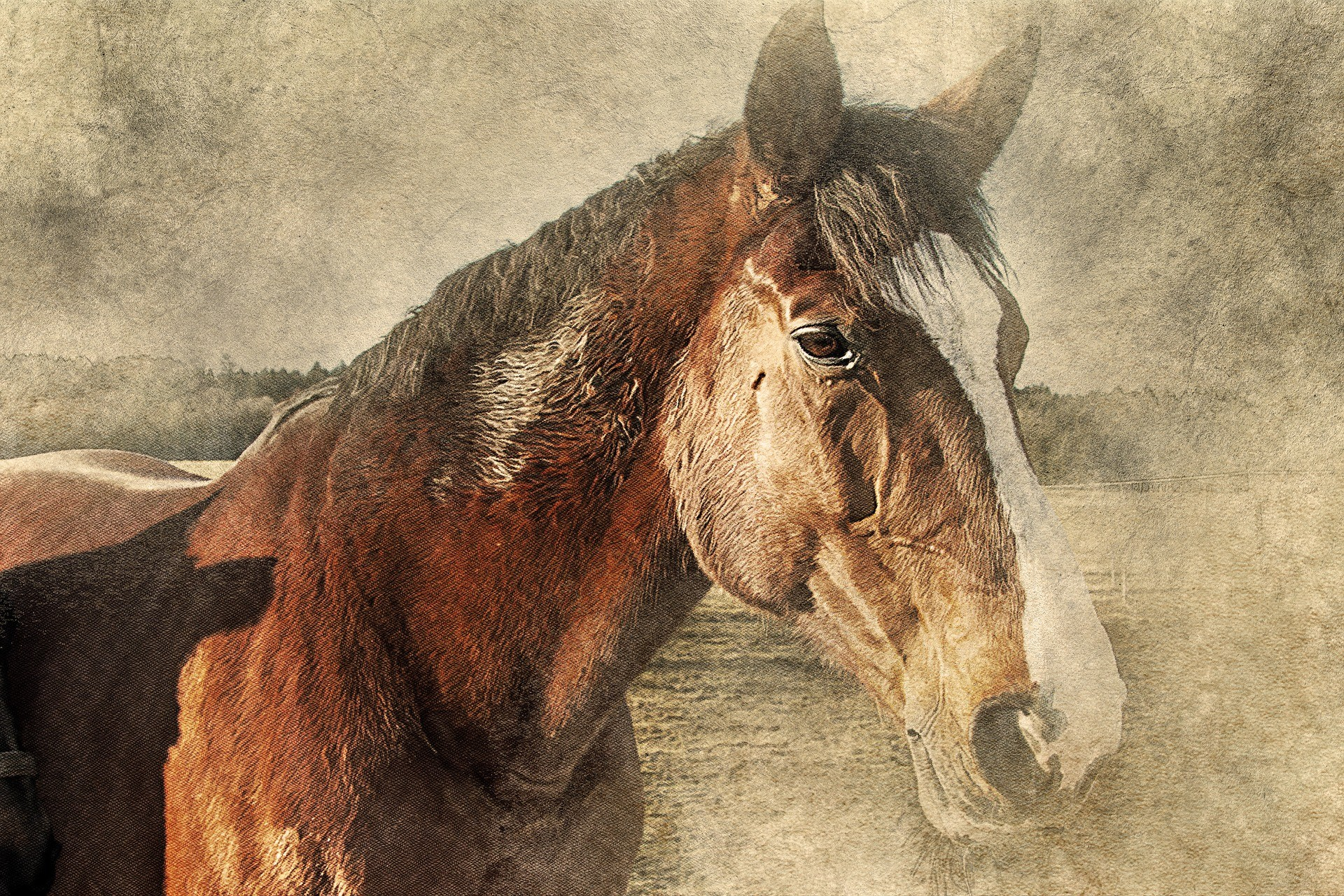cheval-HD