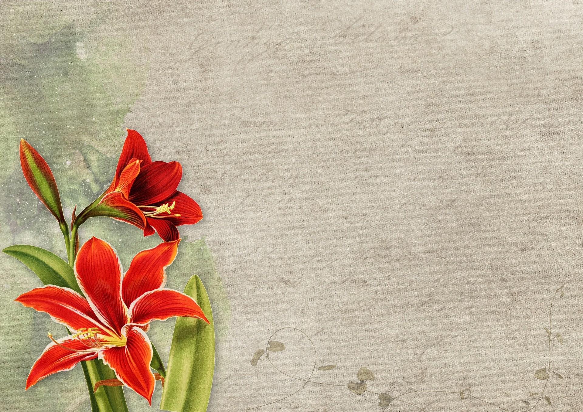 fond-et-fleur