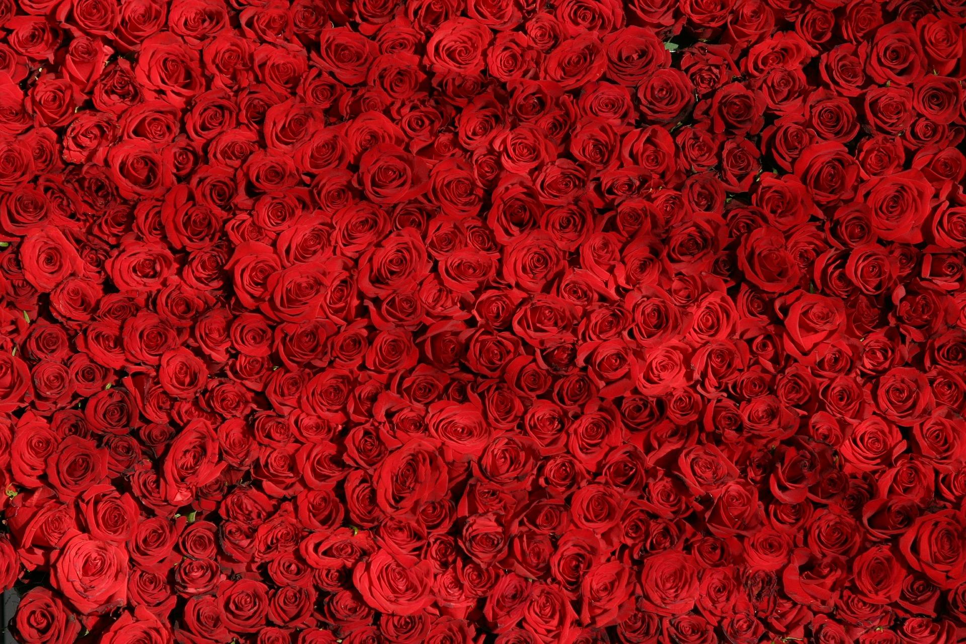 tapis-de-roses-rouges_saint-valentin