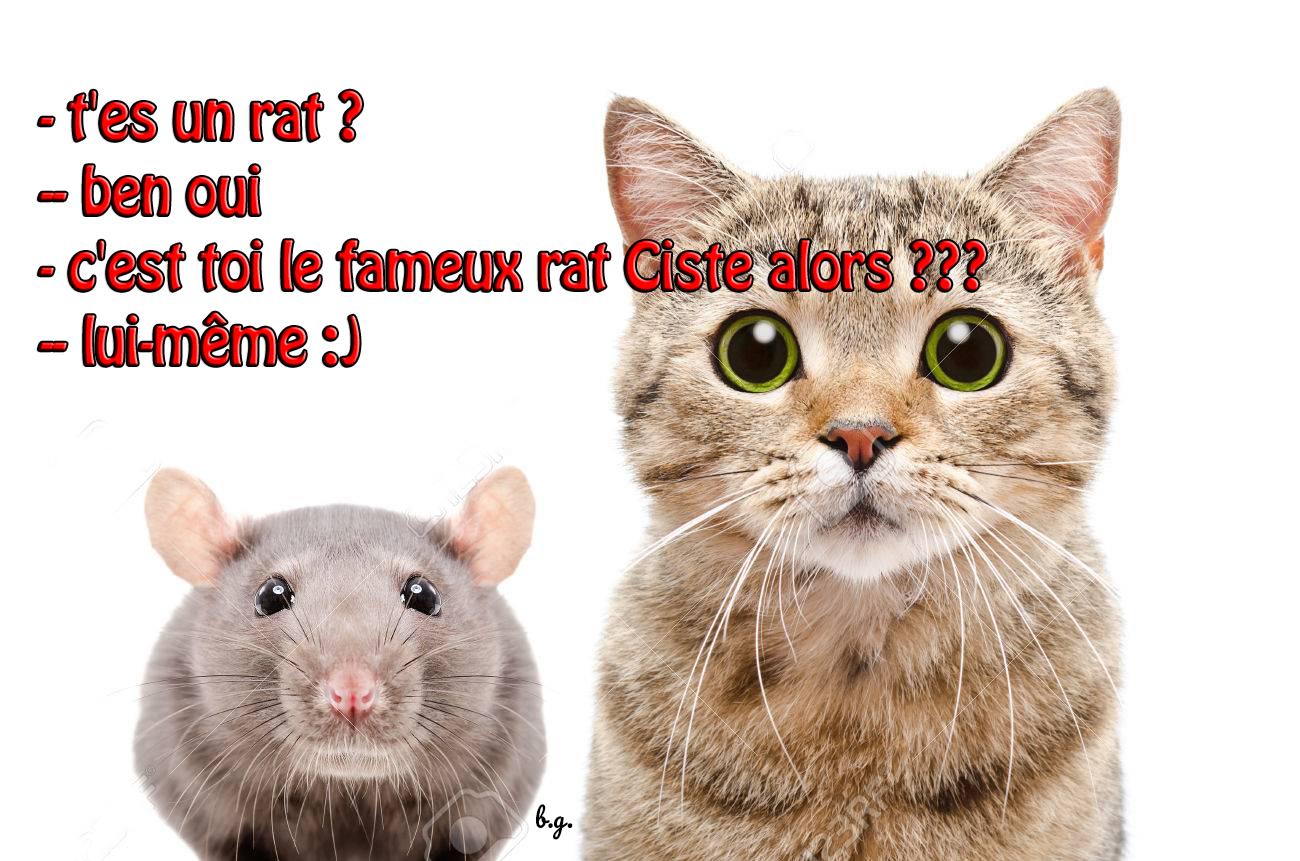 rat-ciste