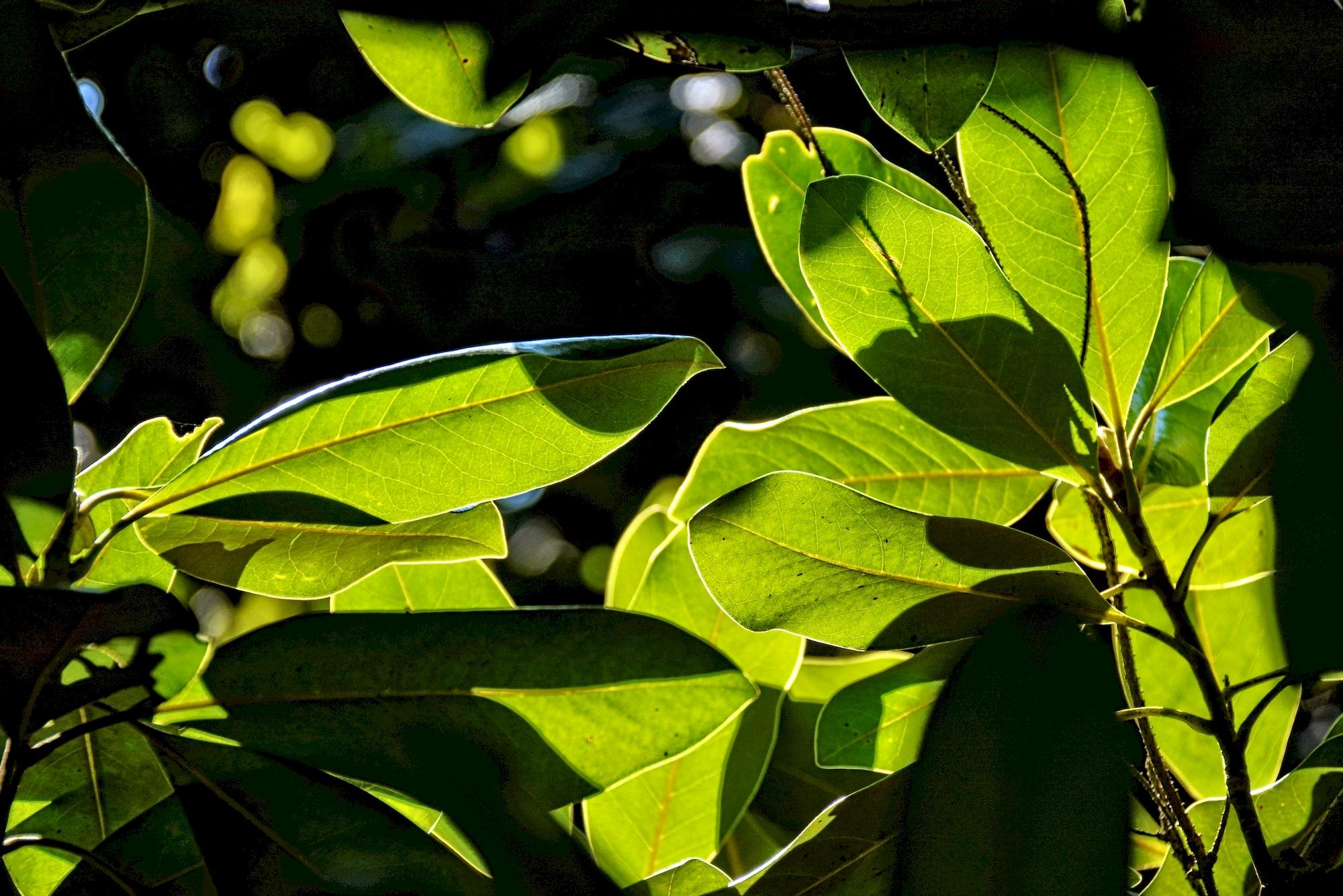 feuilles-et-lumieres