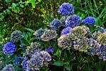 variations-bleu-vert