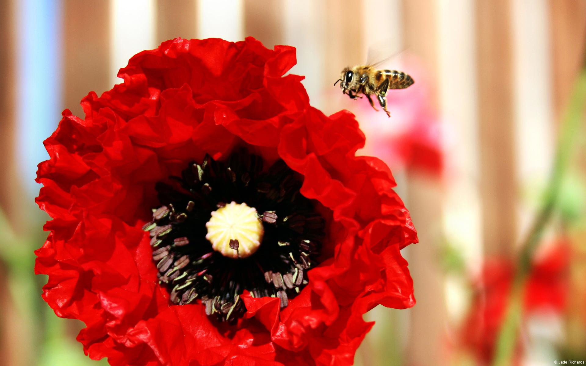 arrimage-en-cours-fonds-ecran-fleurs-HD-gratuits-de-qualite