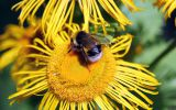butinage-fonds-ecran-de-fleurs-a-telecharger-gatuit-en-ligne