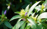 fleur-et-bougeon-fonds-ecran-de-fleurs-a-telecharger-gatuit-en-ligne