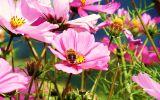 fonds-ecran-de-fleurs-pour-ecran-large-et-portable