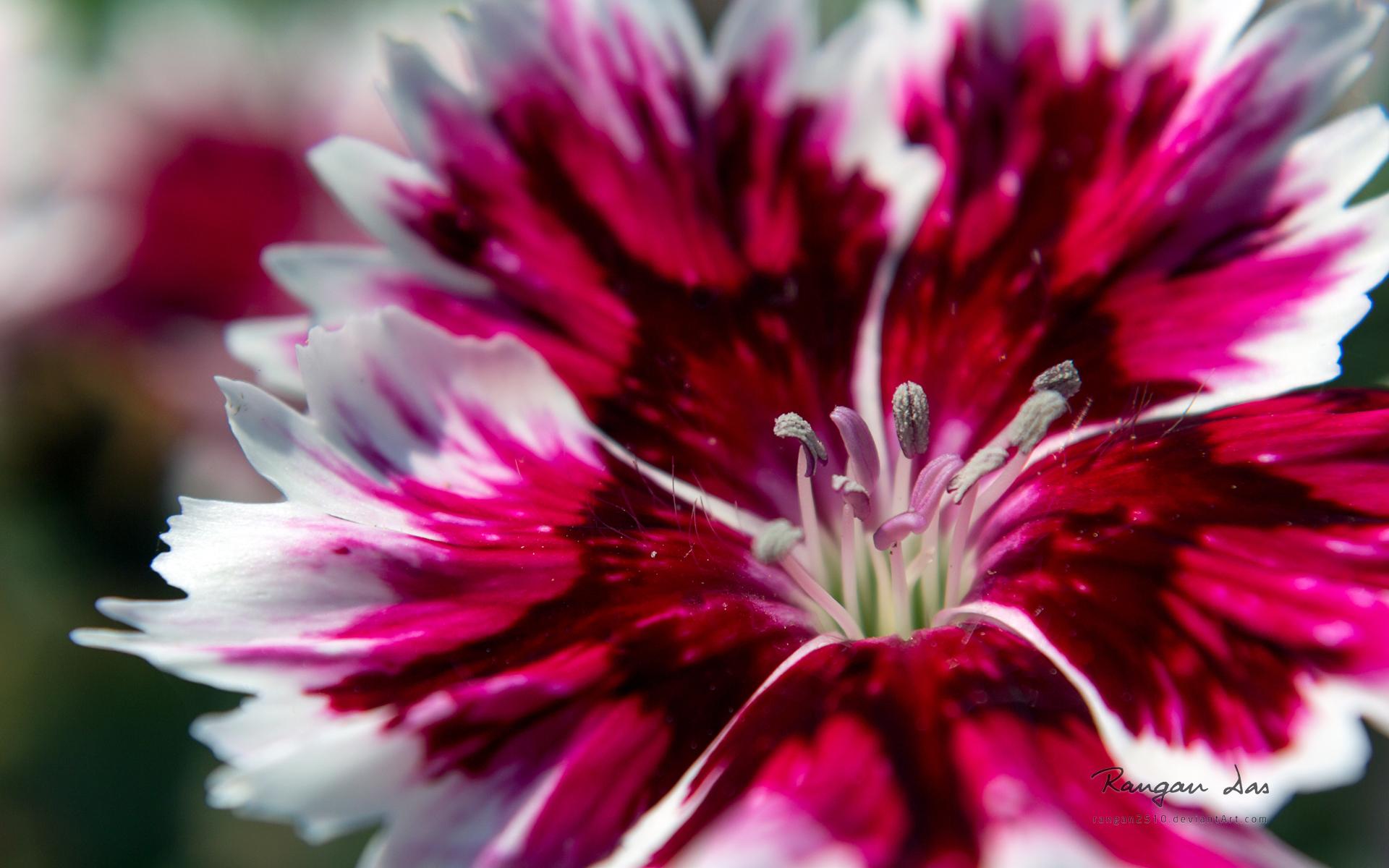 fonds-ecran-fleurs-ordinateur-ou-tablette