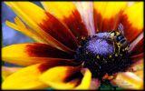 macro-photographie-de-fleur-ordinateur-ou-tablette