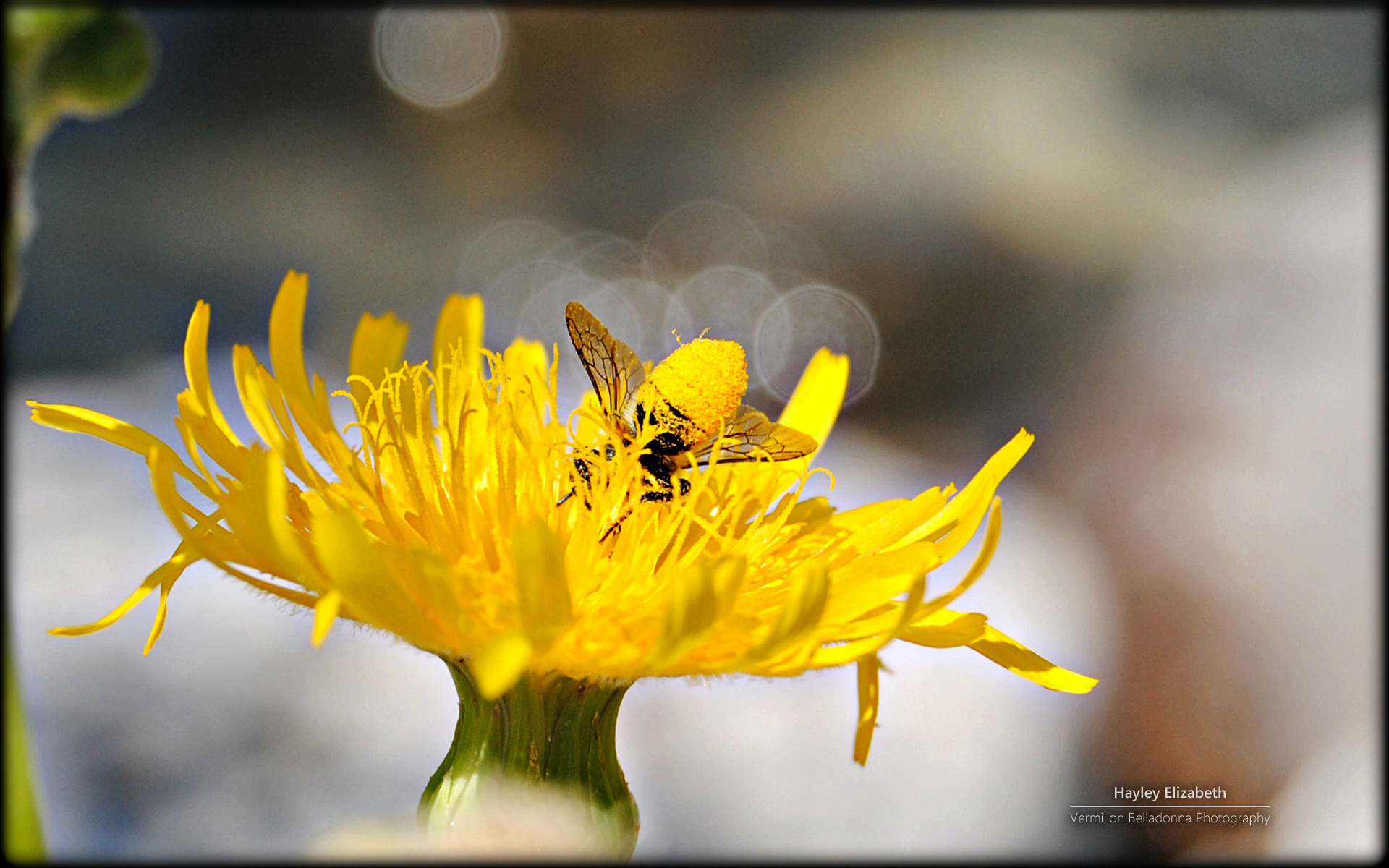 point-jaune-fonds-ecran-fleurs-HD-gratuits-de-qualite