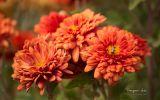 regal-fonds-ecran-fleurs-ordinateur-ou-tablette