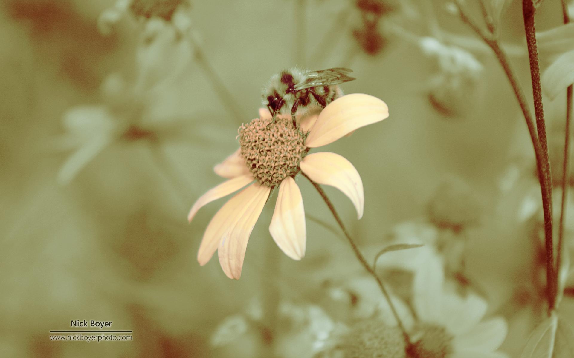 virage-sepia-et-fond-ecran-de-fleurs-pour-ecran-large-et-portable
