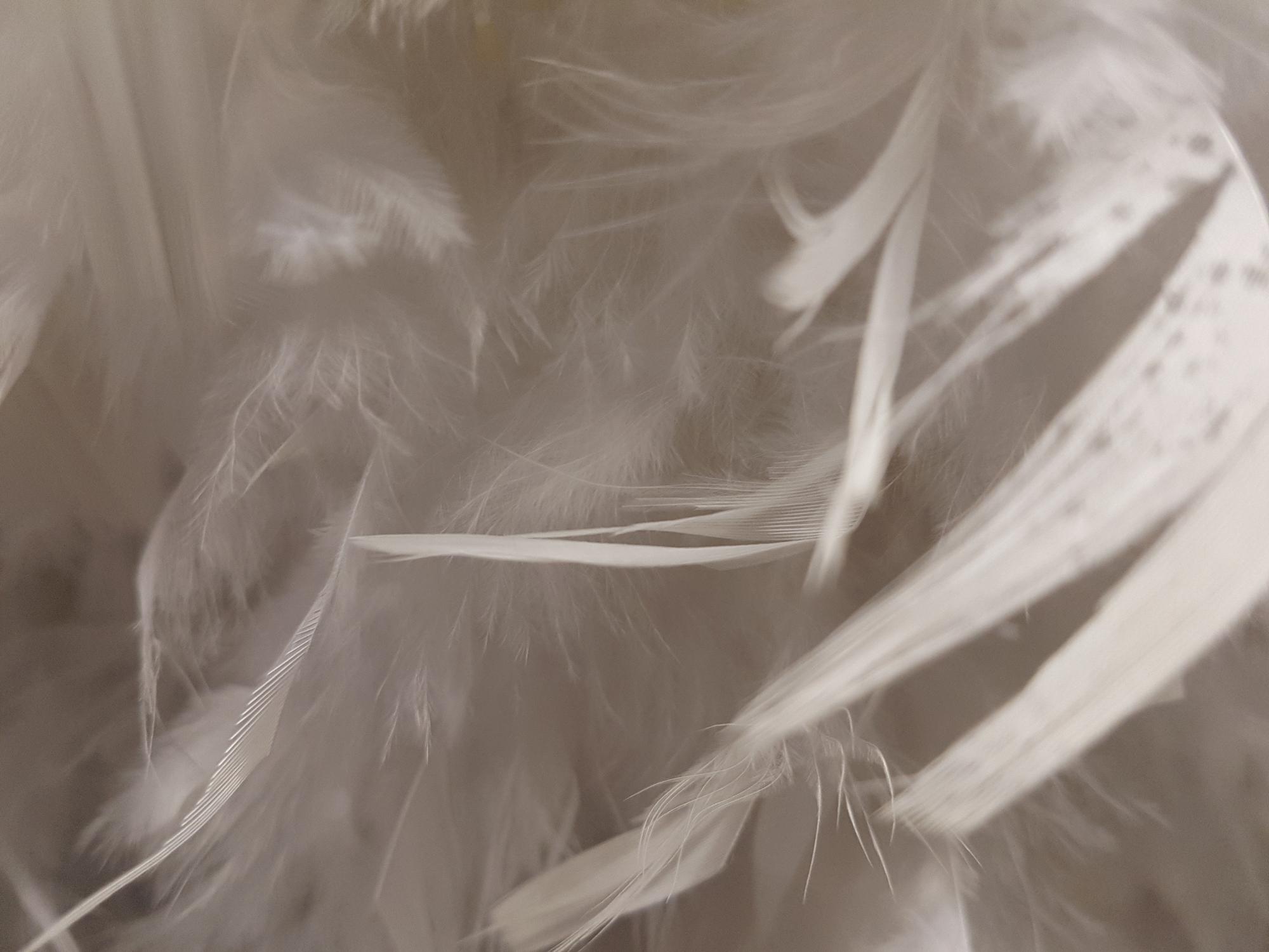 decoration-plumes-gratuit-noel-blanc