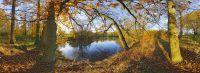 sous-bois-photographie-panoramique