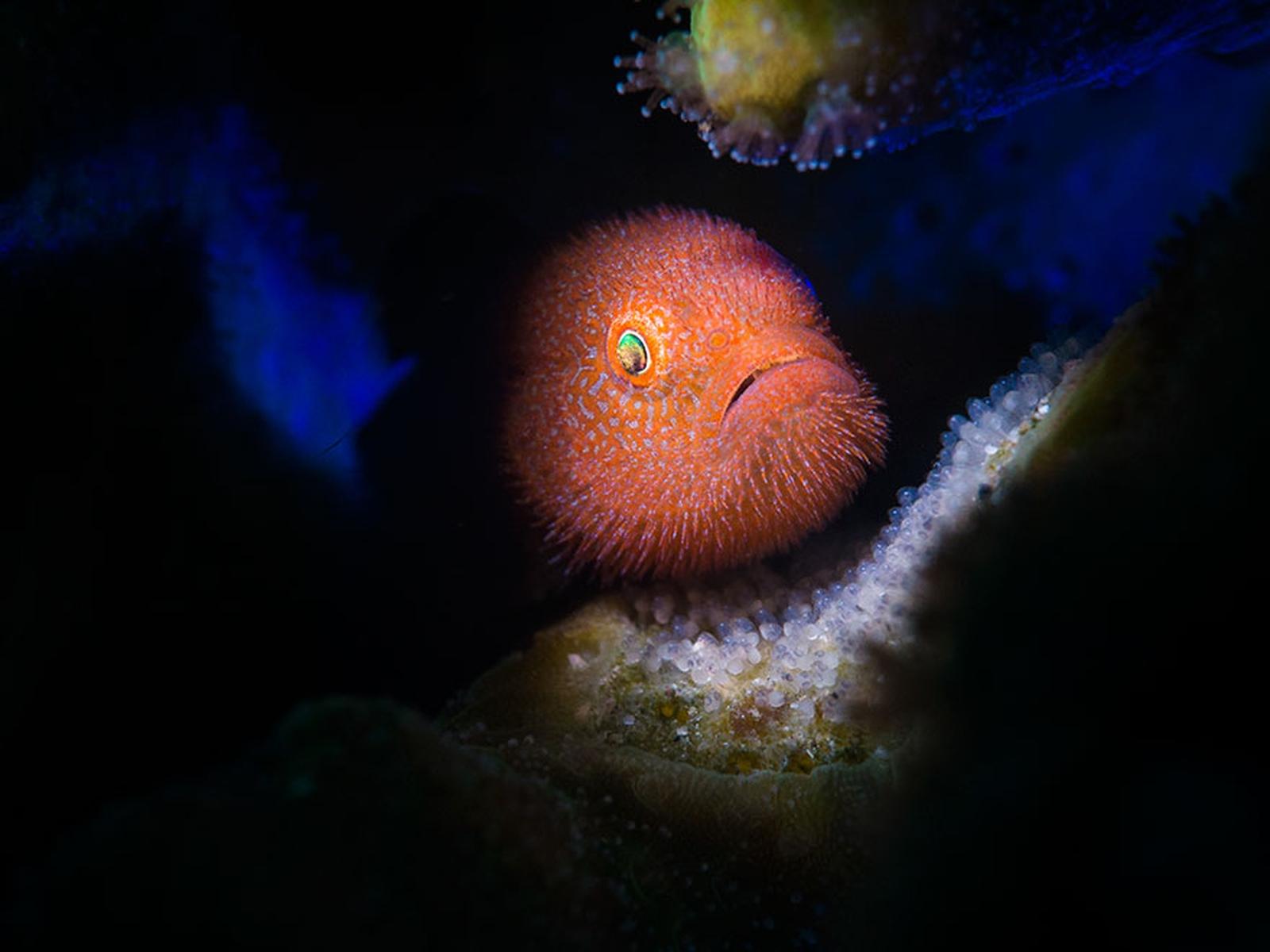 ocean-art-contest-winners_04