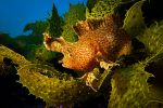 photo-sous-marine-selection_04
