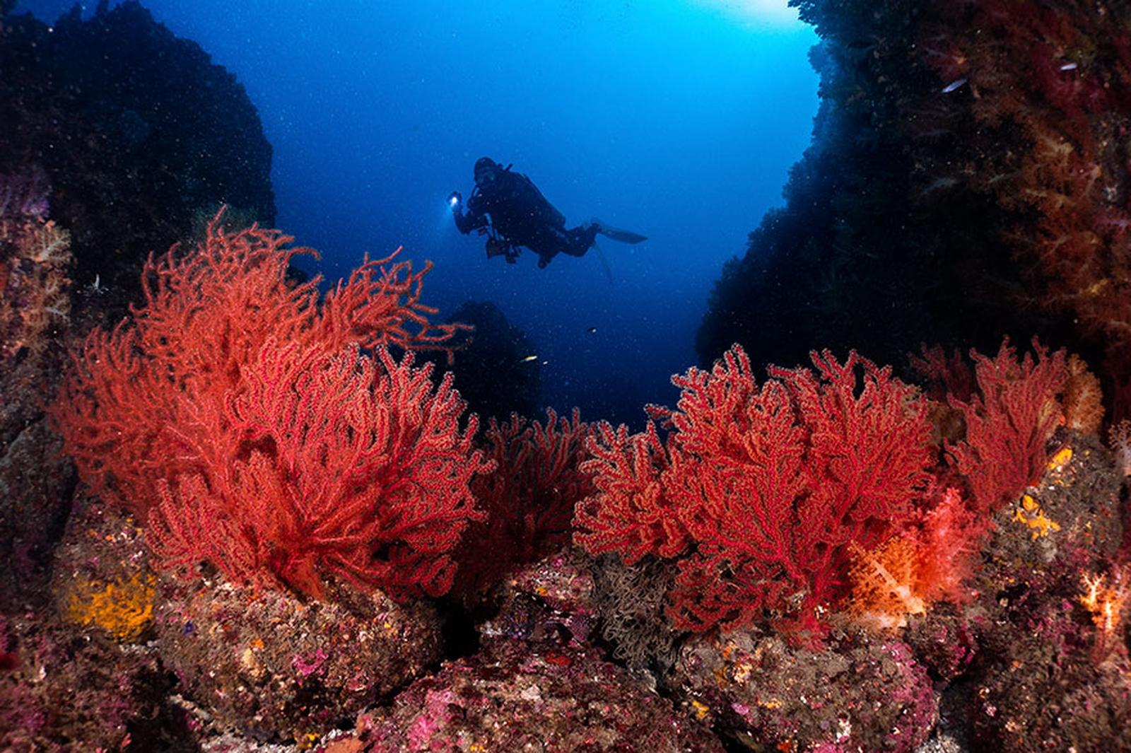 photographie-sous-marine-selection