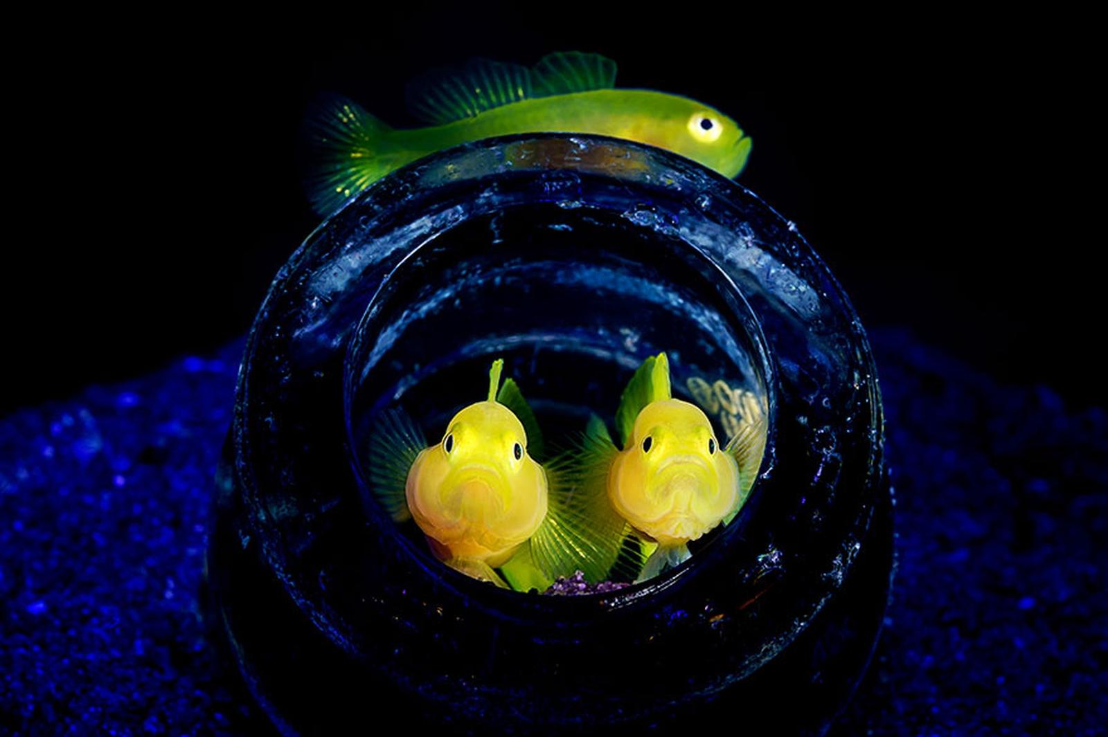 photographie-sous-marine-selection_04