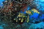 la-vie-au-fond-des-oceans