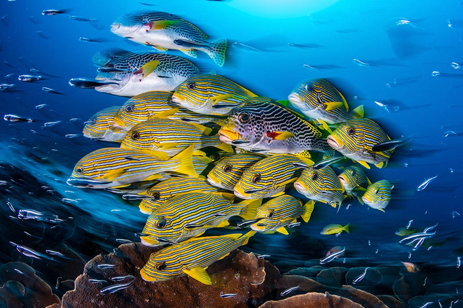 la-vie-au-fond-des-oceans_05