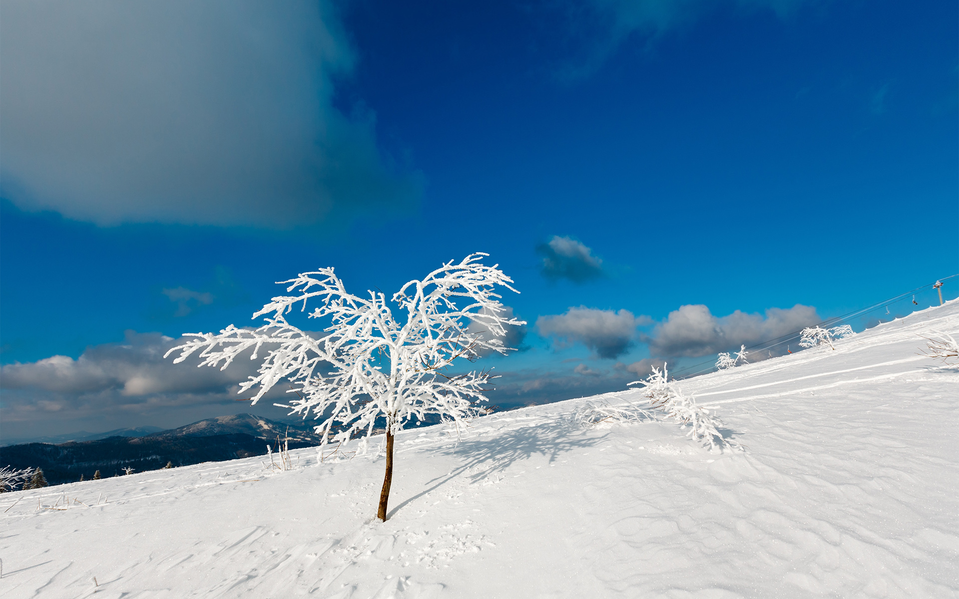 arbre-givre-neige-et-montagne