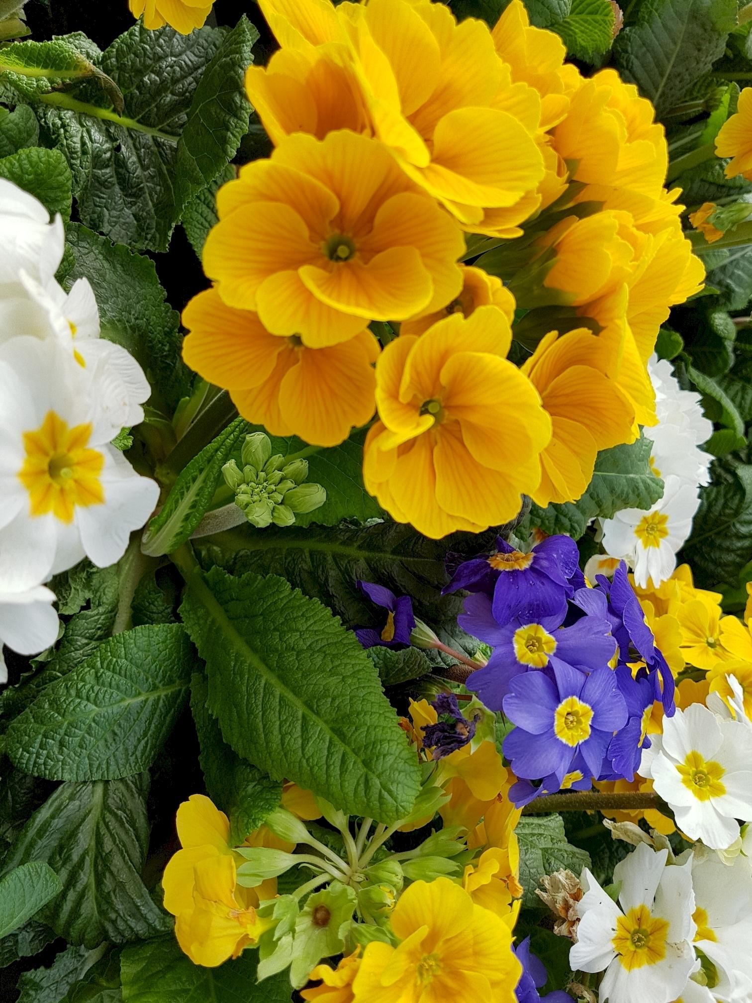 fleurs-de-printemps-jaune-bleu-blanc-vert
