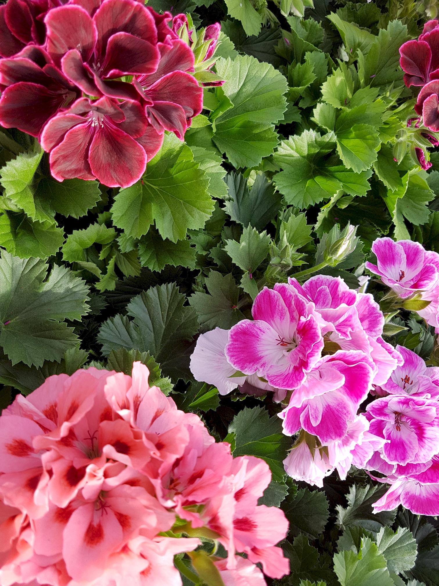 fleurs-de-printemps-telecharger