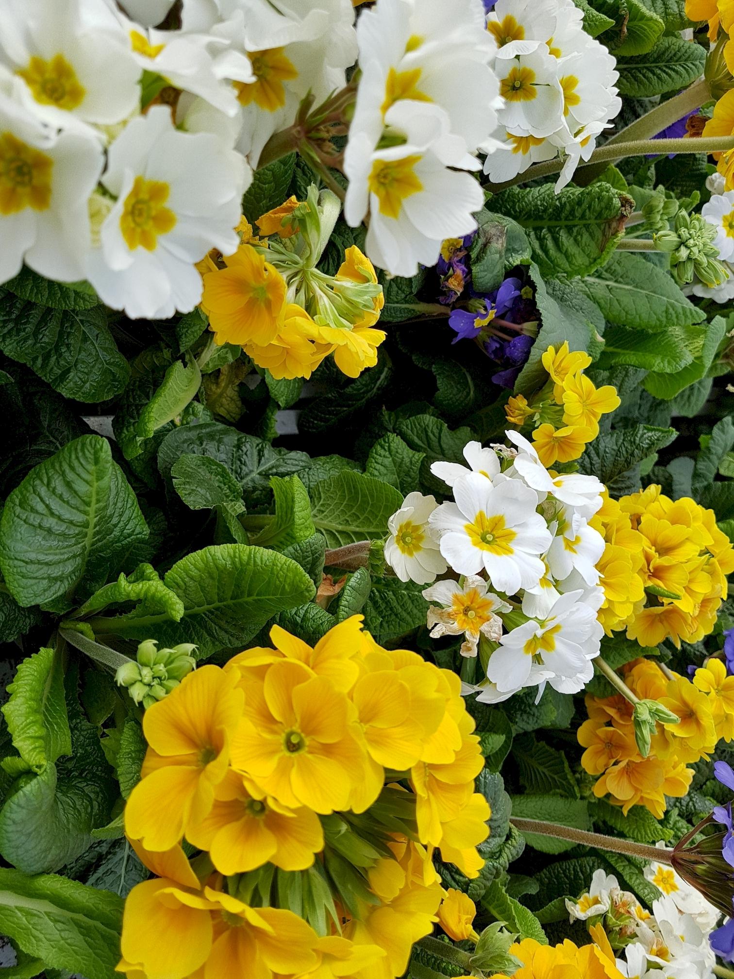 gratuite-telecharger-des-fleurs-de-printemps