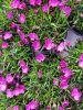 telecharger-des-fleurs-de-printemps