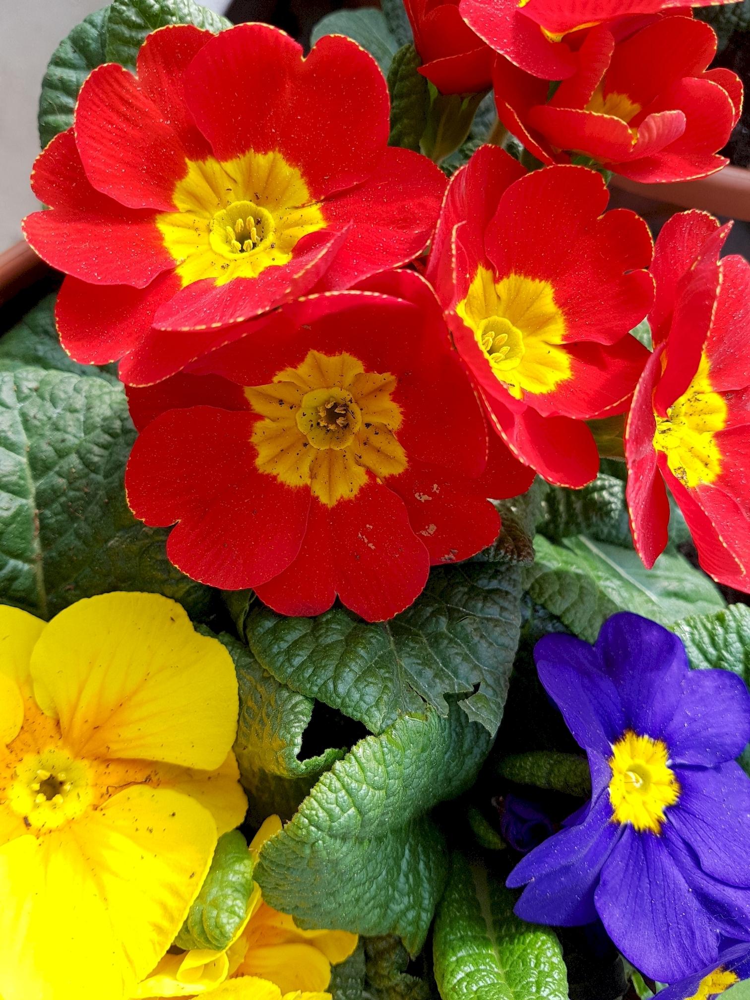 telecharger-des-fleurs-de-trois-couleurs