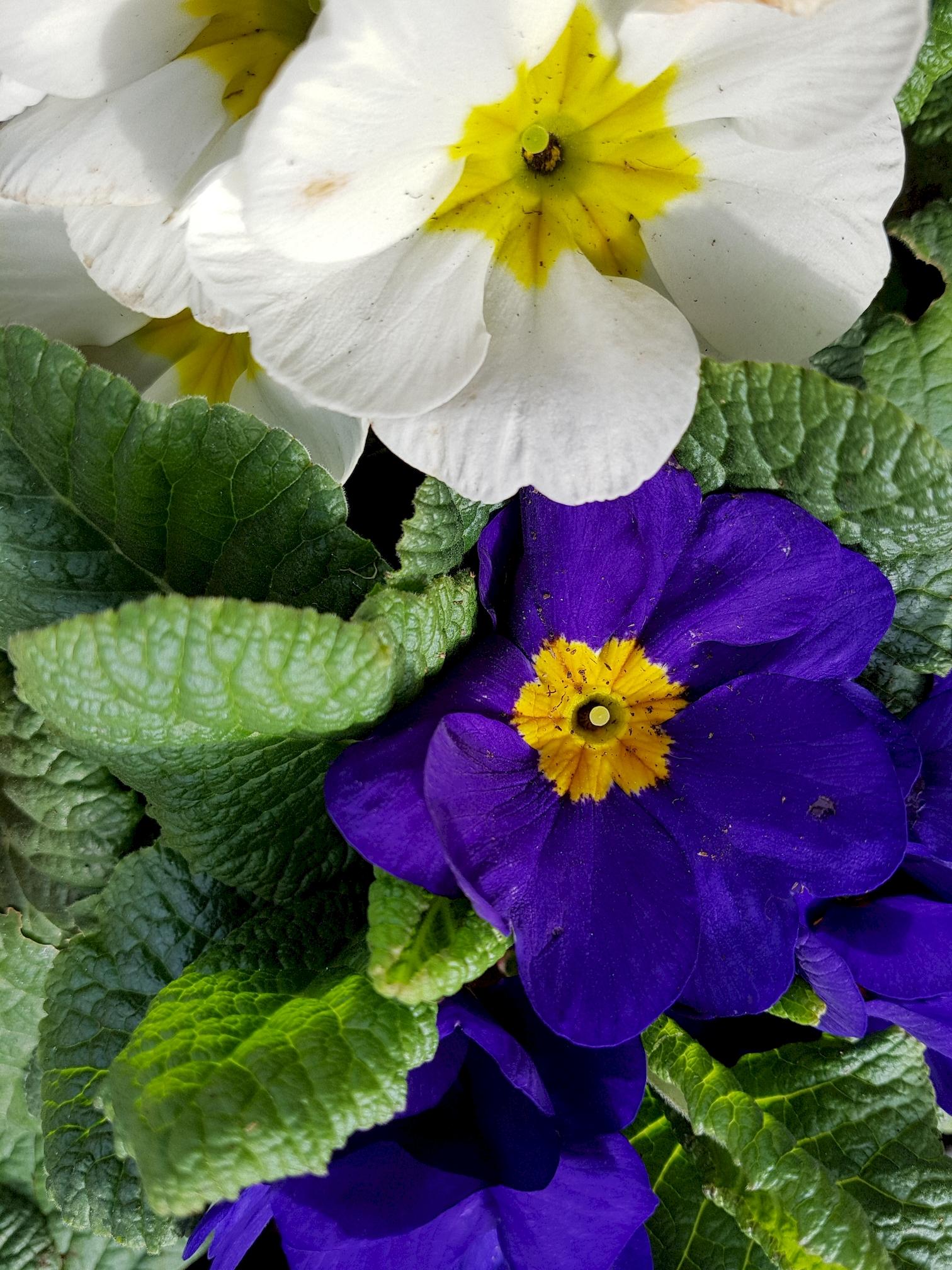 telecharger-des-fleurs-pour-une-tablette