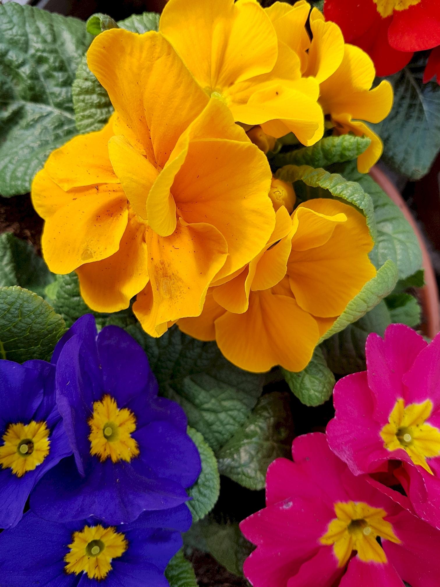 telecharger-gratuitement-des-fleurs-pour-une-tablette