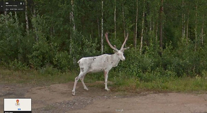 Google-Street-View-surprise