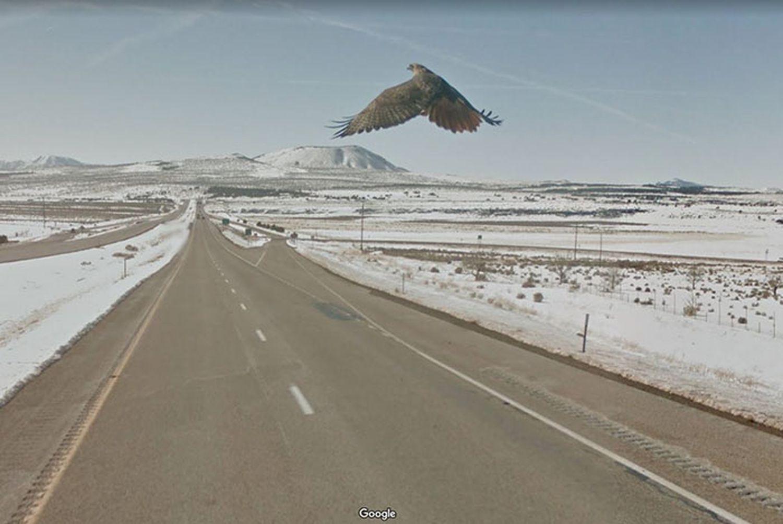 aigle-Google-Street-View-oiseaux