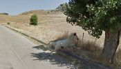 animaux-photos-by-Google-Street-View-cheval