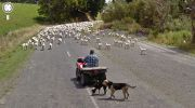 animaux-photos-by-Google-Street-View-chevres