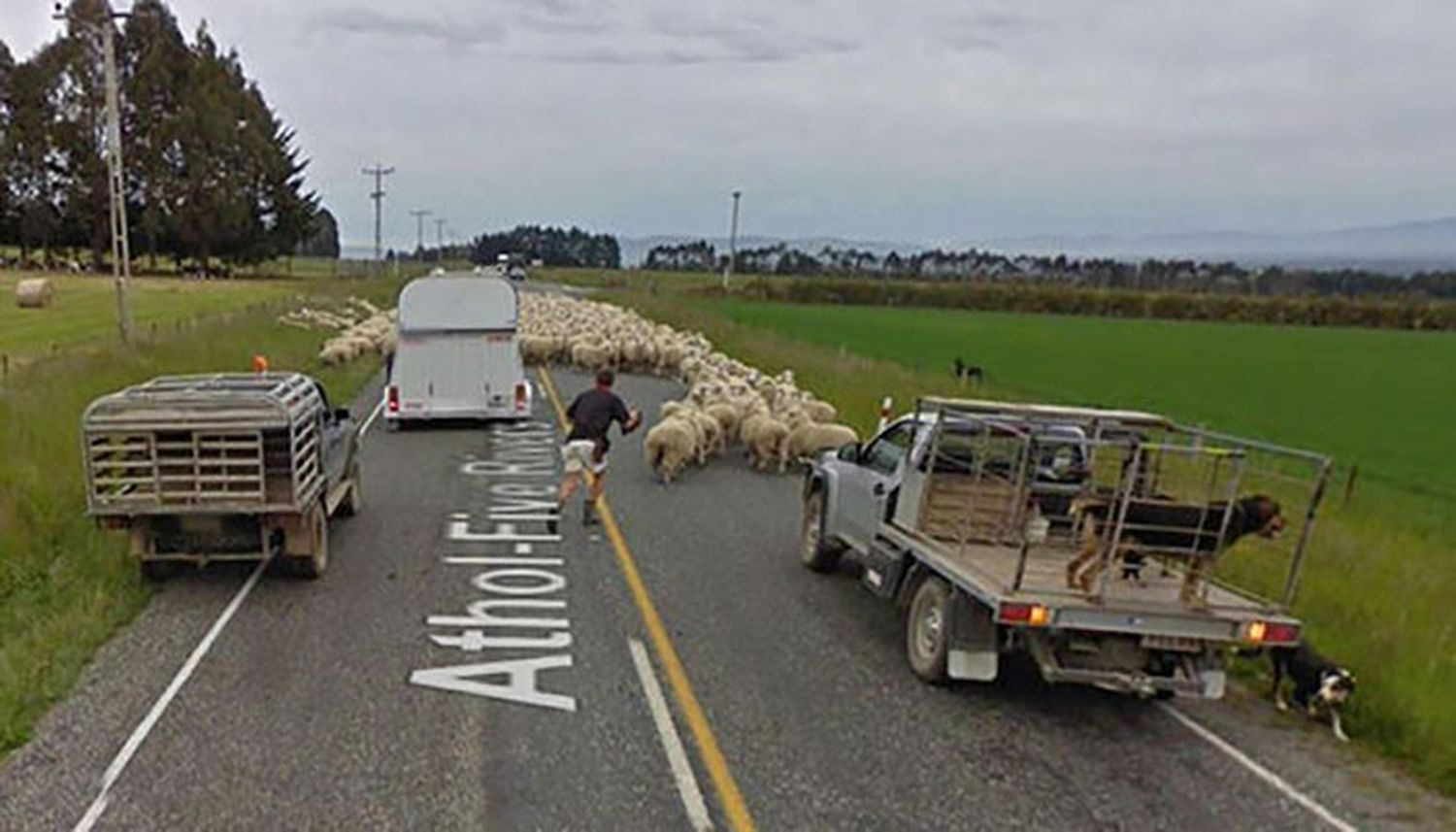 animaux-photos-by-Google-Street-View-moutons