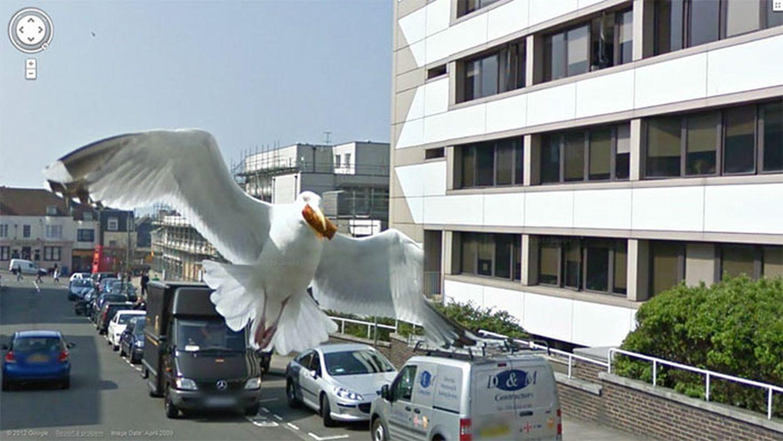 animaux-photos-by-Google-Street-voleur