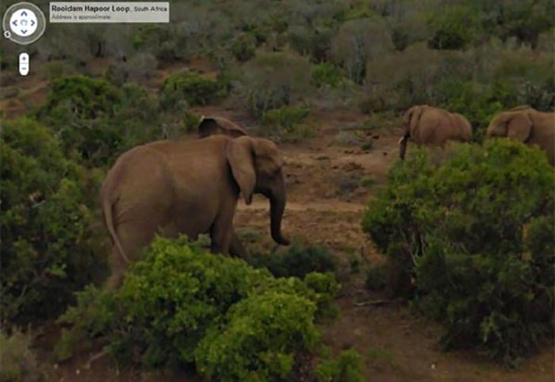 elephants-by-Google-Street-View