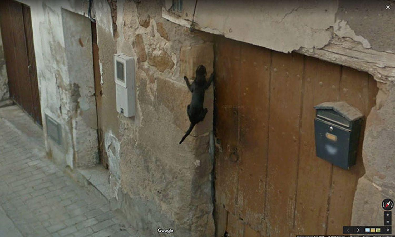 le-chat-sur-le-mur
