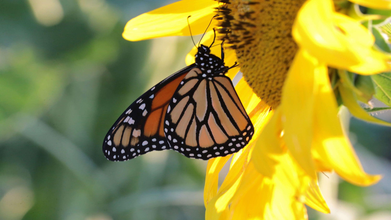 le-papillon-et-la-fleur