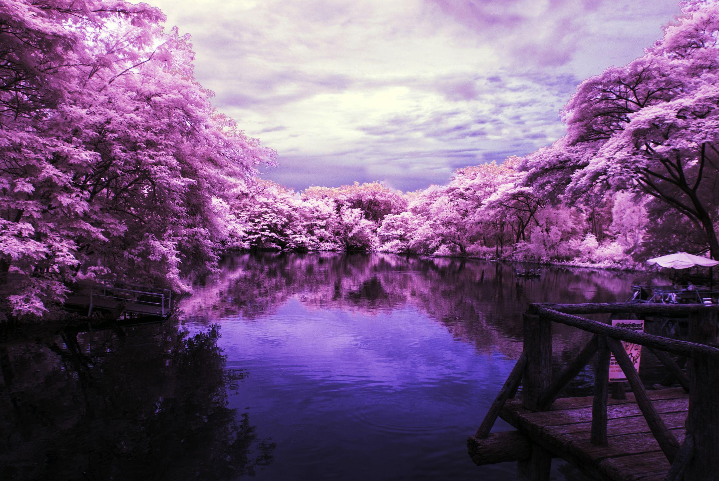 infrarouge-tons-violets
