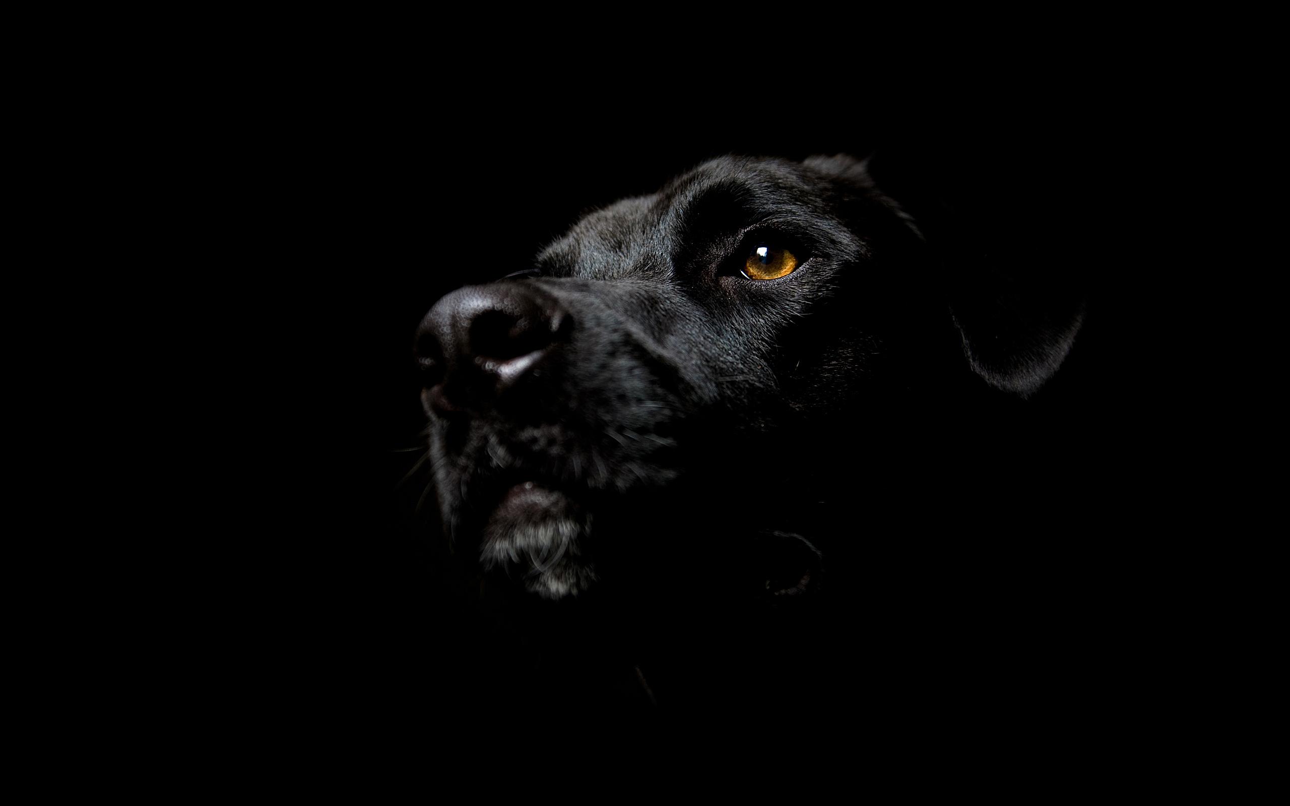 enttre-chiens-et-loups_18